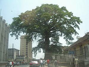Cotton Tree - Freetown